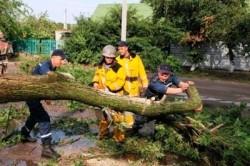 Уборка дерева