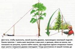 Определение высоты дерева